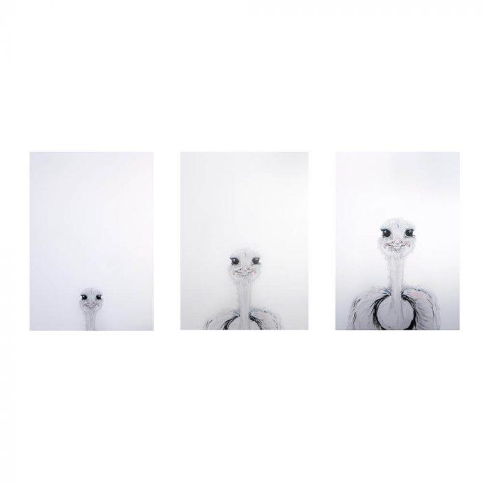 Ostrich-Print-Set-white-Background